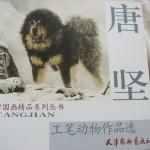 Tiger-唐堅